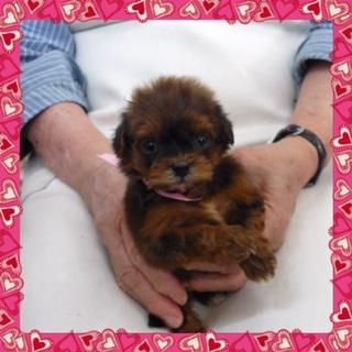 ○ ミックス犬(メス)№15