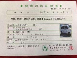 ○ トイプードル (オス)№60