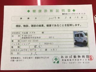 ○ 柴犬 (メス)№59