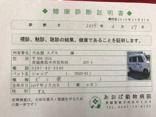 ○ 柴犬 (オス)№61