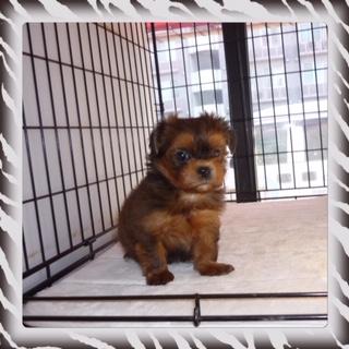 ○ ミックス犬(オス)№62